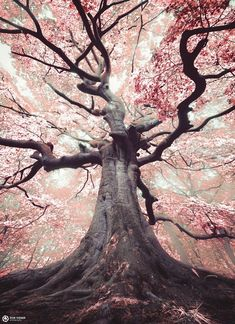 """landscape-lunacy: """"The blossomed witch tree in the Netherlands - by Rob Visser """" Tree Photography, Landscape Photography, Beauty Photography, Unique Trees, Old Trees, Nature Tree, Nature Witch, Nature Nature, Human Nature"""