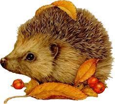 Images and GIFs TV, movies, series, sport on PhotoFunky. Hedgehog Art, Cute Hedgehog, Funny Animal Photos, Cute Animal Pictures, Baby Animals, Funny Animals, Cute Animals, Gif Animé, Animated Gif