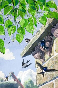 House-martins build their nests, illustration by C.F.Tunnicliffe for ladybird book 'What to look for in Summer',1960.