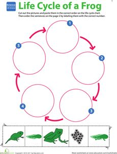 Life Science Learning: Life Cycle of a Frog Worksheet