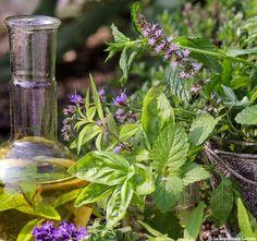 La phytothérapie, ou médecine par les plantes, a longtemps reposé sur la seule expérience des praticiens. Aujourd'hui, cette discipline bénéficie d'avancées ...