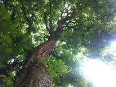 Back to your roots in de schaduw van deze krachtige kastanje in de tuin van de Buurtboerderij...