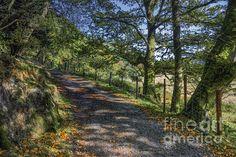 Autumn Countryside by Ian Mitchell fineartamerica.com