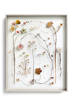 Here's yet another great way to decorate with the help of Mother Nature. These delicate flowers pressed between two panes of glass make for an evocative yet dainty display! (Photo: Anne Ten Donkelaar via Anneten) Pressed Flowers Frame, Dried And Pressed Flowers, Pressed Flower Art, Dried Flowers, Flower Collage, Flower Frame, Arte Floral, Flower Pictures, Flower Seeds
