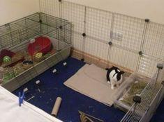 Diy Bunny Hutch, Diy Bunny Cage, Bunny Cages, Rabbit Cages, Indoor Rabbit House, House Rabbit, Mini Rex Rabbit, Pet Rabbit, Rabbit Playpen