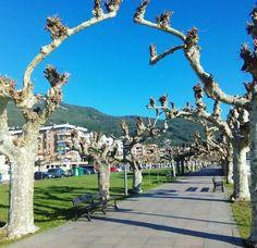 01/12/15 El arbolado paseo de Pereda, junto al paseo marítimo, en esta soleada tarde de otoño. Santoña te espera!