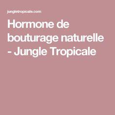 Hormone de bouturage naturelle - Jungle Tropicale
