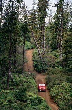 Munroe Trail, Lanai.  Renting a Jeep is a MUST!! #iHeartLanai #Hawaii