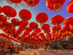 Picture of numerous red lanterns hung for the Spring Festival in China