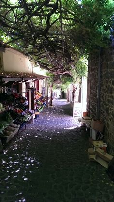 Molivos, Lesbos, Greece