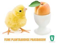 Eivrij Pasen - Wat zijn goede ei-alternatieven?  #eivrij #Pasen