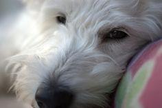 My Fur Baby, Poppy, relaxing!