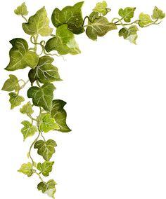 Ivy Snip