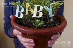 Baby Announcement Plant Photographed by Akaash Ram - India - FairMail - Fair Trade Photos - IAKR-0282