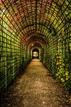 Autumn Tunnel