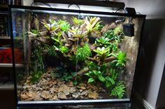 Frog Vivarium 011114 008 WEB | by anders_risberg