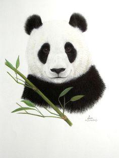 Original Pastel Drawing Giant Panda with Bamboo