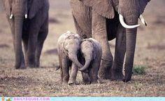 Forever Friends--awwww, with elephants!!