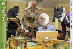 """Must-have iPhone app: CatPaint. """"Add cats to any photo!"""" $.99 LOVE THIS"""