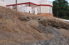 Terraplen lateral de Cuesta del Balbo. 18/09/2013