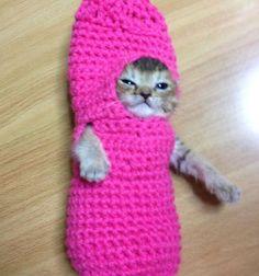 Kitten in crocheted costume!