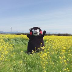 #kumamon  gấu mập by ___97319gn