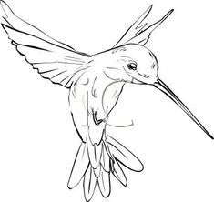 Image result for black and white hummingbird drawing