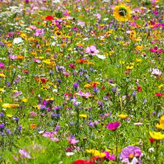 To give a garden more naturalness you can use a meadow instead of lawn Meadow Garden, Lawn And Garden, Garden Art, Garden Types, Le Hangar, Garden Furniture Design, Pinterest Garden, Garden Makeover, Small Garden Design