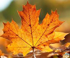 """Você sabe por que as folhas caem no outono? Explicamos esse """"mistério"""" lá no blog. Confira: ow.ly/Z9KDa"""