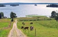 Countryside in Taivalkoski. Finland, Countryside, Golf Courses, To Go, Places, Lugares