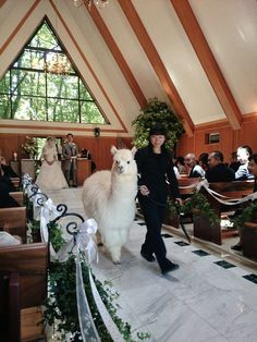In Japan Your Wedding Witness Can Be An Alpaca