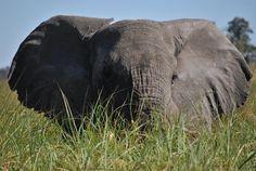 """""""Aria condizionata ecologica"""" della turistapercaso Frutta in Botswana #buongiorno #twitpic #bigfive"""