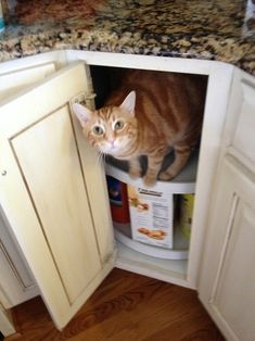 """""""First off, how the hell did you get in there? Second, how long were you in there?!"""" 