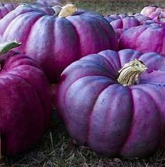 Violet brings a purple pumpkin to her fairy godmother Plum. Plum Purple, Purple Rain, Shades Of Purple, Purple Door, Light Purple, Samhain, Purple Pumpkin, Malva, Colors