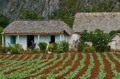 Cuban farm by redeyesatdawn, via Flickr