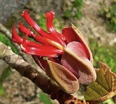 An Herbal Tour Of The World In 9 Tasty, Useful Plants - World Science Festival