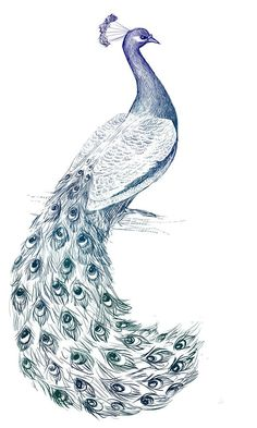 Beautiful 3D Peacock Drawing Best 25+ Peacock Drawing Ideas On Pinterest | Peacock Art, Drawing