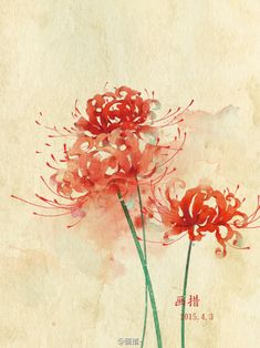 曼珠沙华,手绘 Japanese Watercolor, Japanese Painting, Japanese Art, Watercolor Flowers, Watercolor Paintings, Red Spider Lily, Lilies Drawing, Lily Painting, Chinese Art