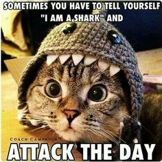 """Be a shark. Attack the day. """"Sometimes you have to tell yourself """"I am a shark"""" and attack the day."""""""