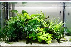 Amazing Aquascape Freshwater Gallery Ideas 85 image is part of Amazing Aquascape Gallery Ideas that You Never Seen Before gallery, you can read and see another amazing image Amazing Aquascape Gallery Ideas that You Never Seen Before on website Planted Aquarium, Aquarium Aquascape, Aquascaping, Aquarium Garden, Nano Aquarium, Nature Aquarium, Aquarium Design, Aquarium Ideas, Tropical Freshwater Fish