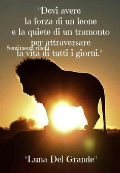 You have to have the strength of a lion and stillness of a sunset to cross everyday life.~ love this! V Quote, Cogito Ergo Sum, Most Beautiful Words, Italian Quotes, My Motto, Quotes About Everything, Hippie Peace, My Life Style, Good Thoughts