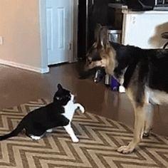 DOWN boy, down... Good boy, there's a good boy.