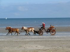 Not too many places where you can sleigh ride on the beach La Baule-Escoublac in Pays de la Loire. Photo by Yan Baczkowski