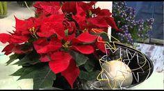 Dla specjalistów handlowców: proste dekoracje z gwiazdą świąteczną w osobistym stylu - YouTube