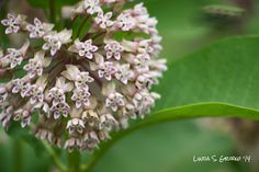 Then you'd better get ready! Fall is the best time to plant in the northern U.S. and parts of Canada. Find DIY instructions and milkweed seeds at Milkweed Rising.