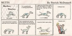 Adopt a Greyhound. You won't be disappointed.