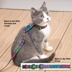 Fun, fabulous designs make these matching collars, leashes and harnesses irresistible!