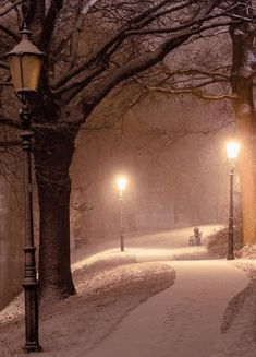 The one lamp post being lit makes me think of Narnia Winter Szenen, Winter Love, Winter Magic, Winter Walk, Winter Trees, Winter Is Coming, Beautiful Places, Beautiful Pictures, Snow Scenes