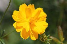 24 pieces Flowers, Plants, Flora, Plant, Royal Icing Flowers, Flower, Florals, Bloemen, Planting