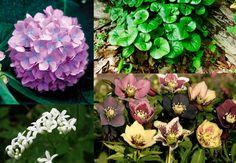 Интересные растения для тенистых мест: ТОП-7 самых красивых | Блог elisheva.ru